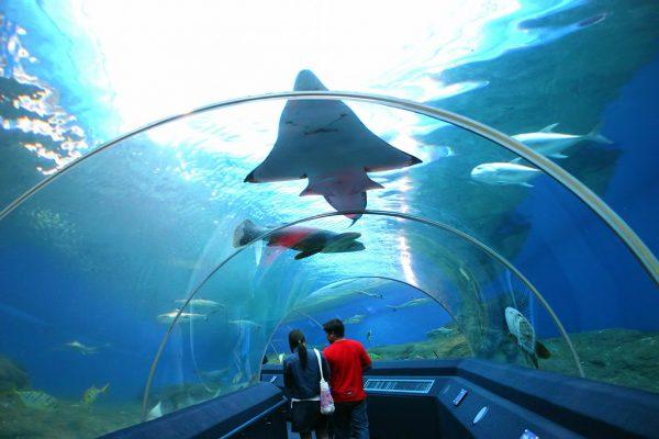 underwater-world-pattaya